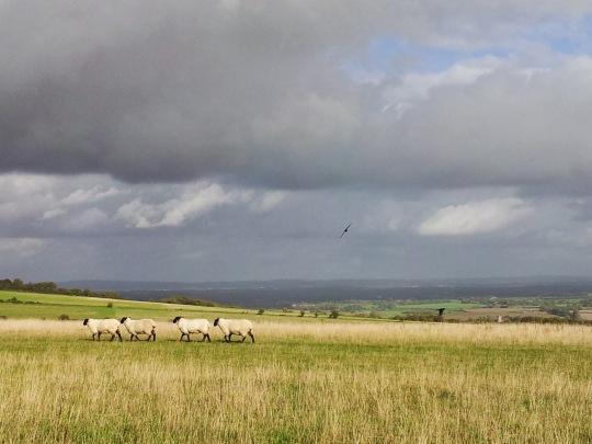 Lewes-hills